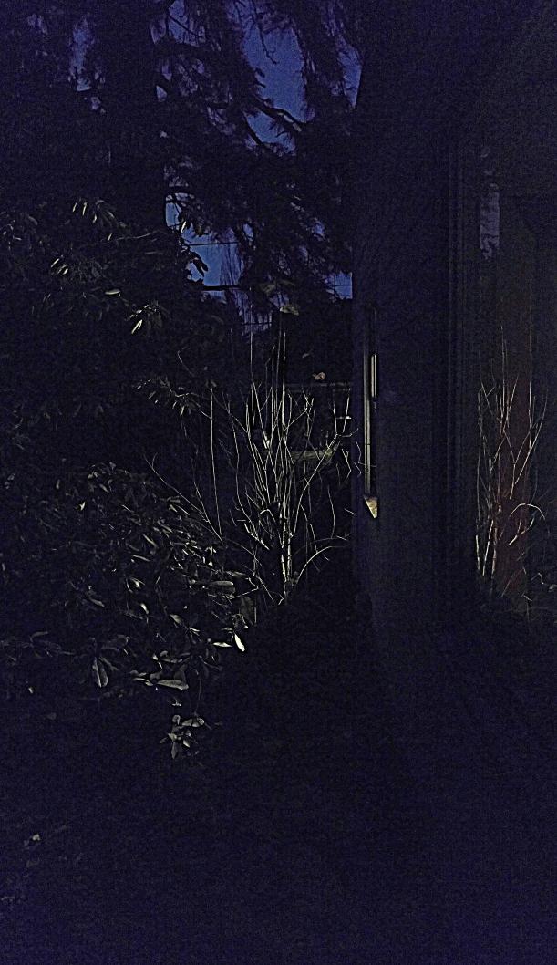 Bare lilac branches